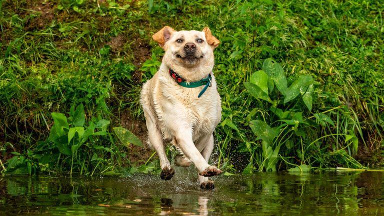 John Carelli / Mars Petcare Comedy Pet Photo Awards 2020