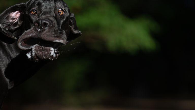 Annett Mirsberger / Mars Petcare Comedy Pet Photo Awards 2020