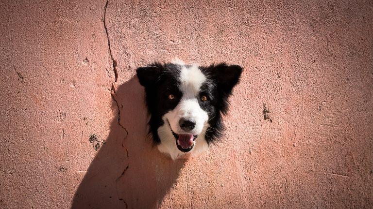 Antonio Peregrino / Mars Petcare Comedy Pet Photo Awards 2020