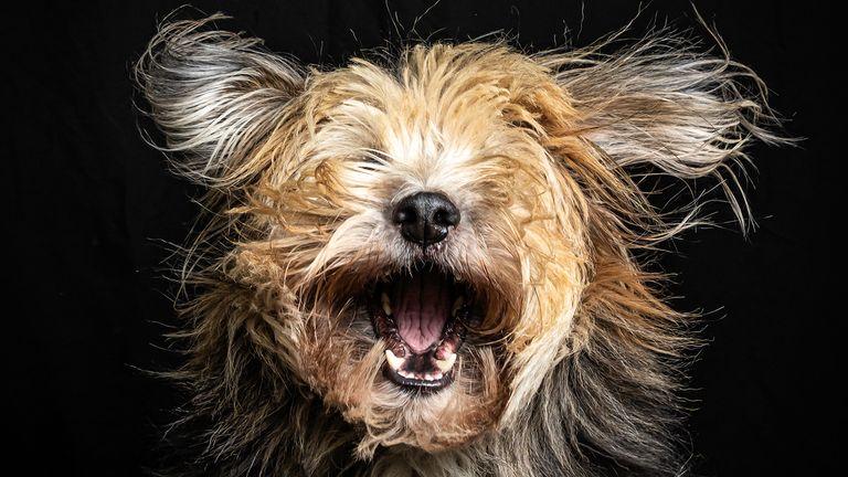 Prix Hetwie van der Putten / Mars Petcare Comedy Pet Photo Awards 2020