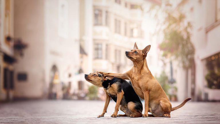 Kerstin Ordelt / Mars Petcare Comedy Pet Photo Awards 2020