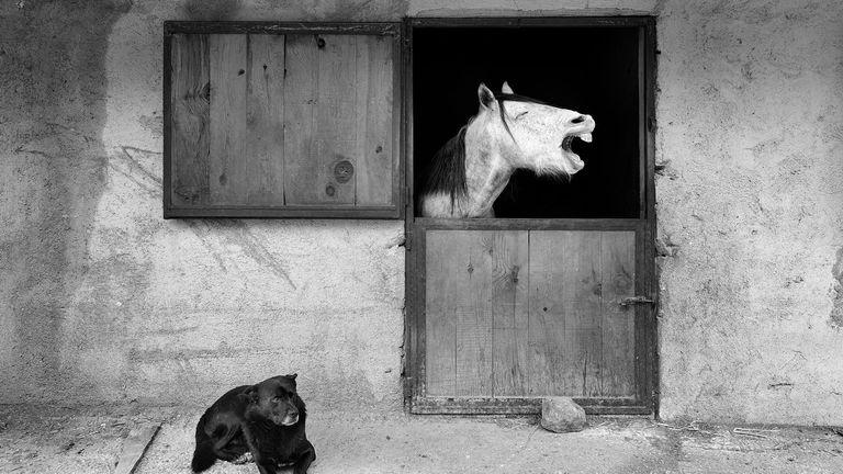 Prix Mehmet Aslan / Mars Petcare Comedy Pet Photo Awards 2020