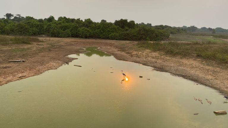 Le Pantanal est la plus grande zone humide tropicale du monde