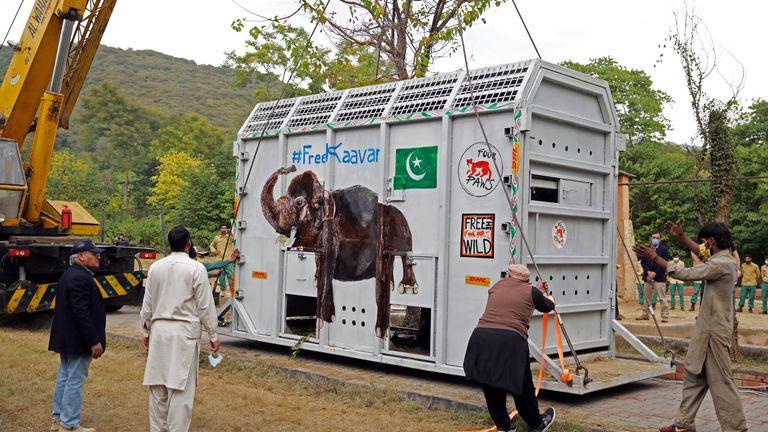 Les experts des animaux se rassemblent comme une caisse de levage de grue transportant Kaavan, un éléphant à transporter dans un sanctuaire au Cambodge, au zoo de Marghazar à Islamabad, Pakistan
