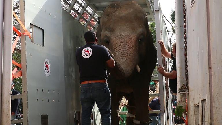 L'éléphant le plus solitaire du monde est rapatrié après les efforts du Cher et d'autres militants des droits des animaux.