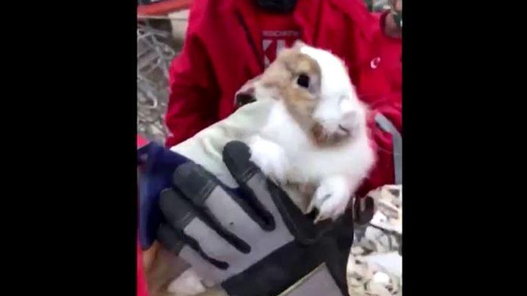 Un lapin de compagnie a également été sauvé par des sauveteurs à Izmir, en Turquie